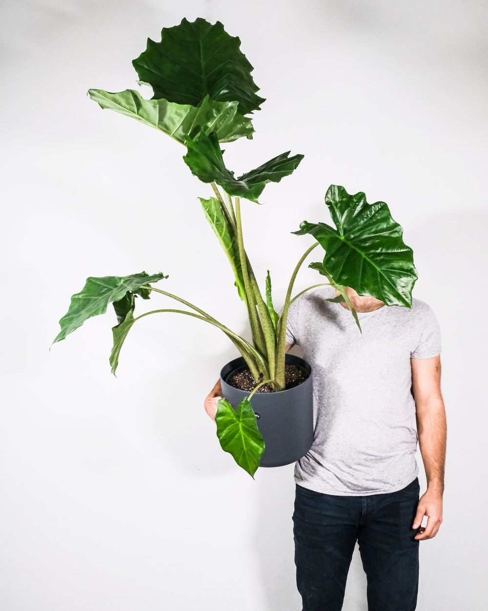 man in gray crew neck t-shirt and black denim shorts holding green plant