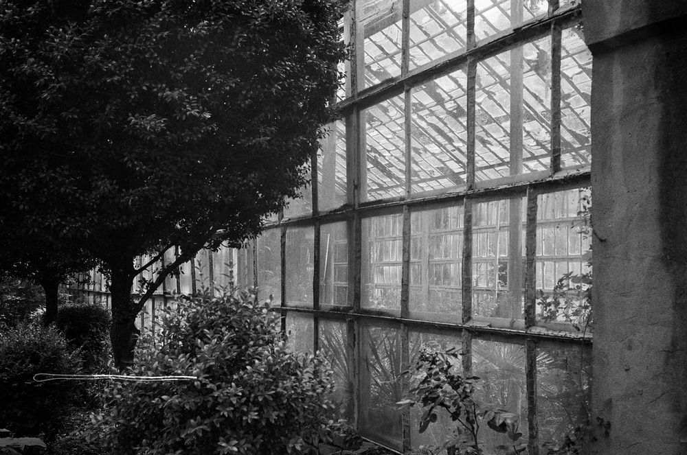 grayscale photo of trees in greenhouse