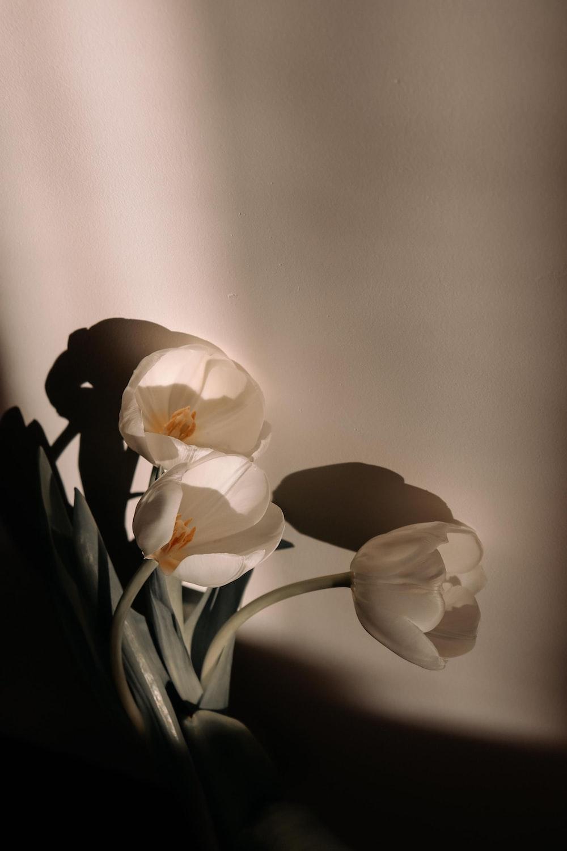 white flower in gray background