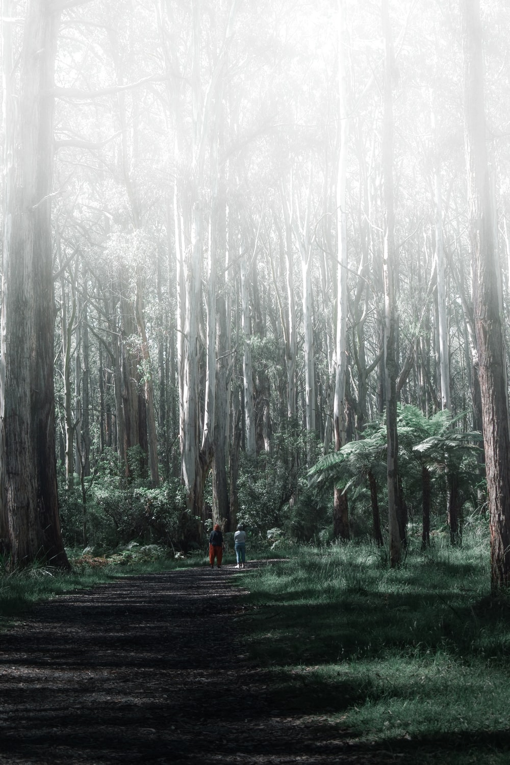 person in orange jacket walking on pathway between trees during foggy weather