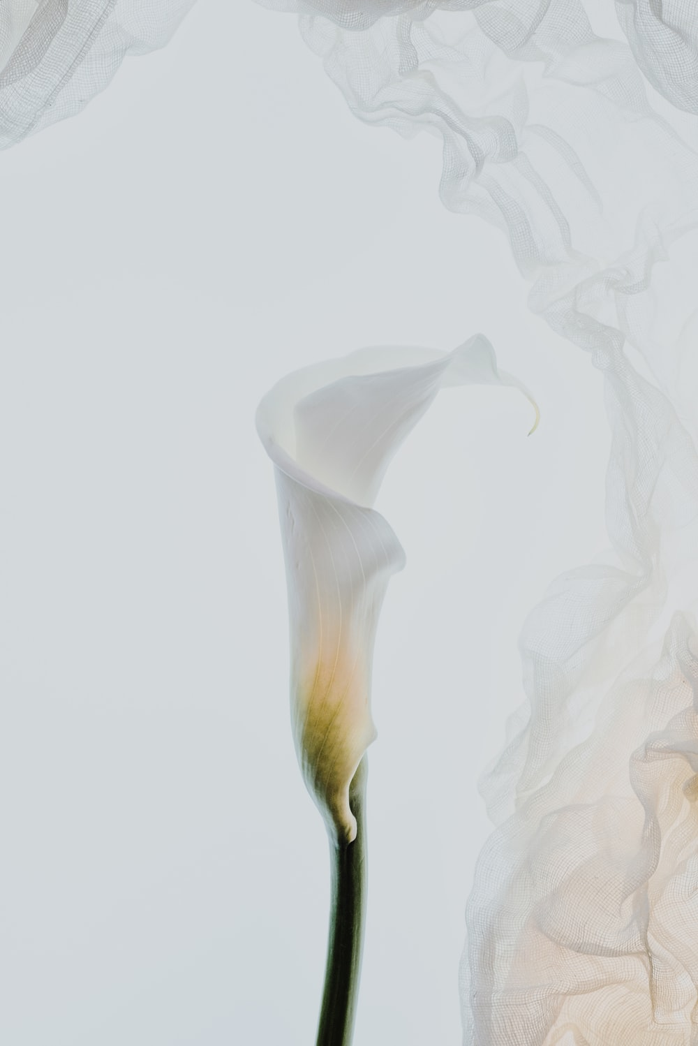 white flower with white background