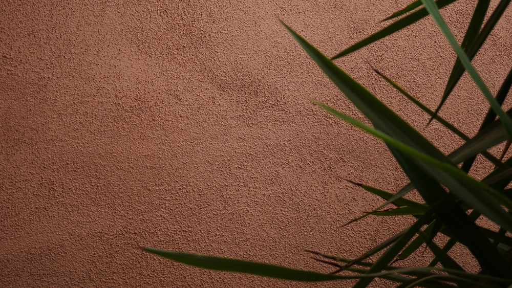 green plant on brown carpet