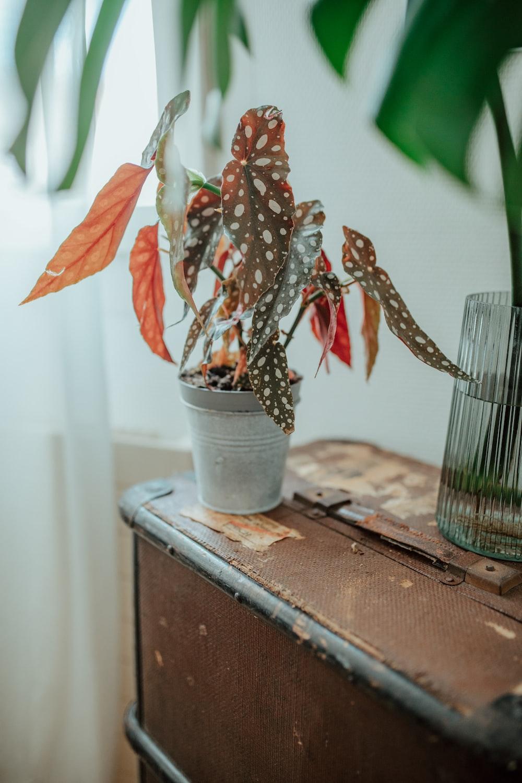 brown plant on white pot