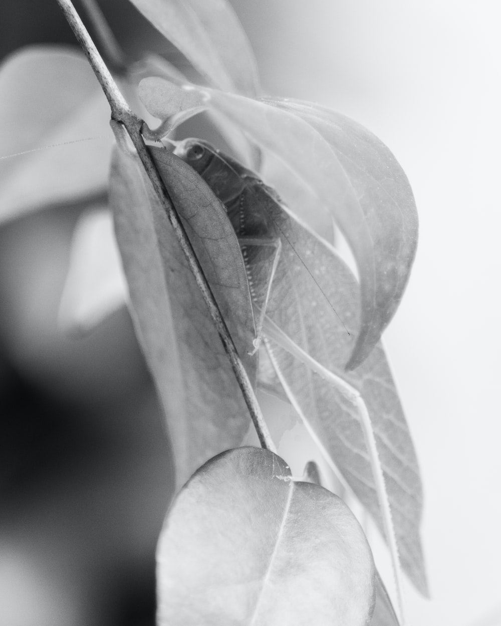 grayscale photo of green leaf
