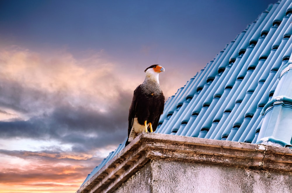 black and white bird on top of gray concrete building