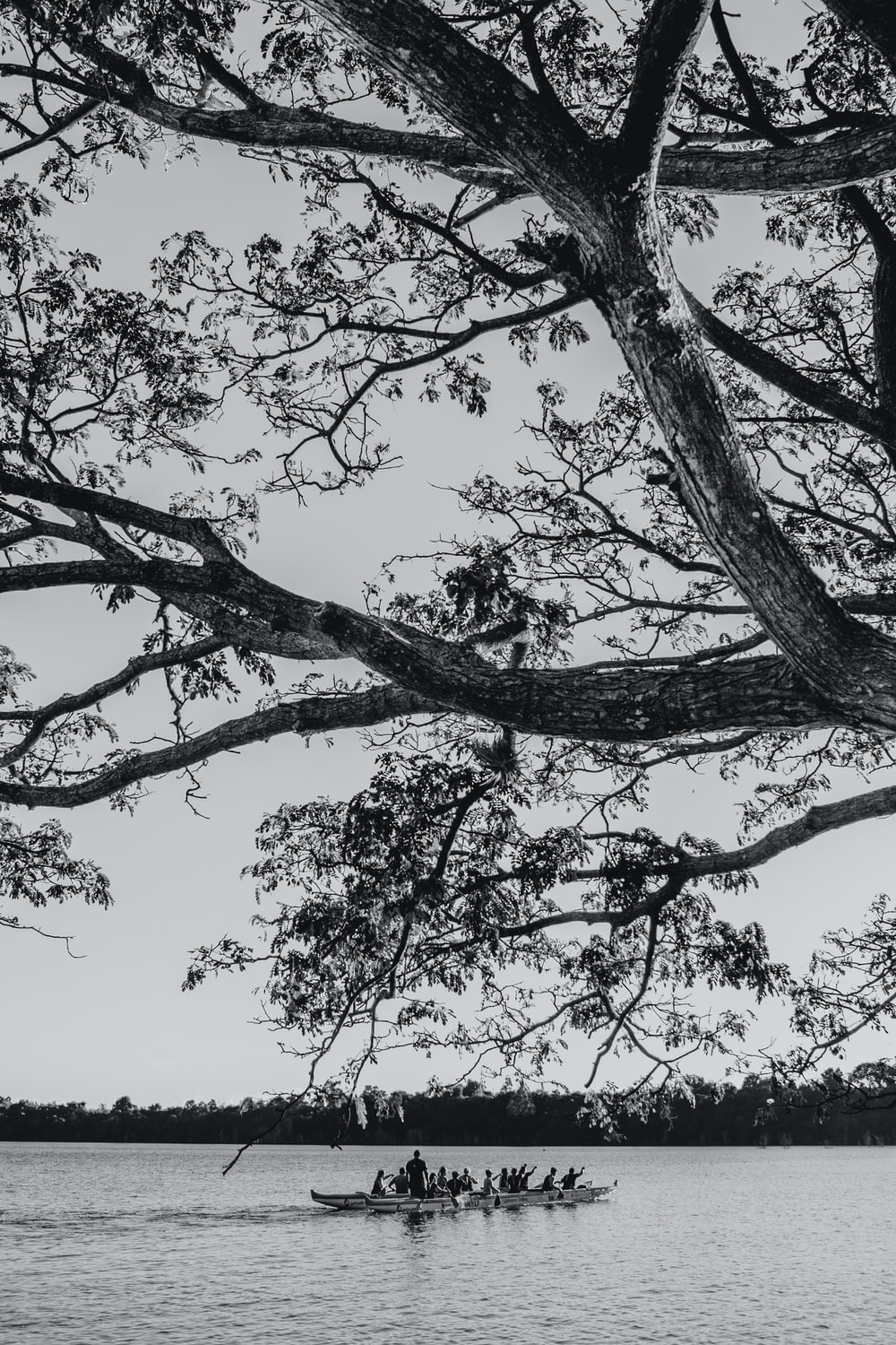 grayscale photo of tree during daytime