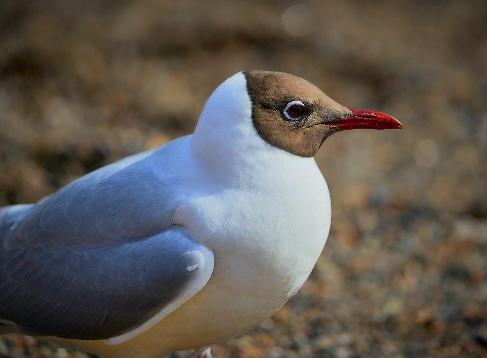 white and blue bird on brown ground
