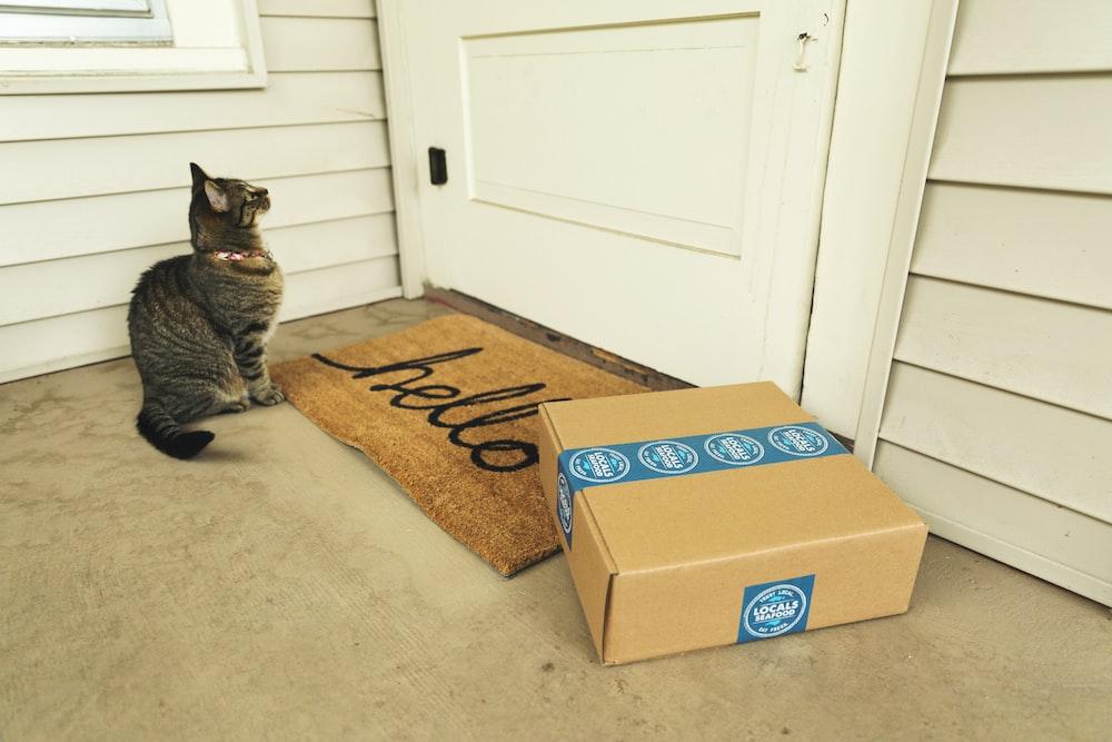 brown tabby cat on brown cardboard box