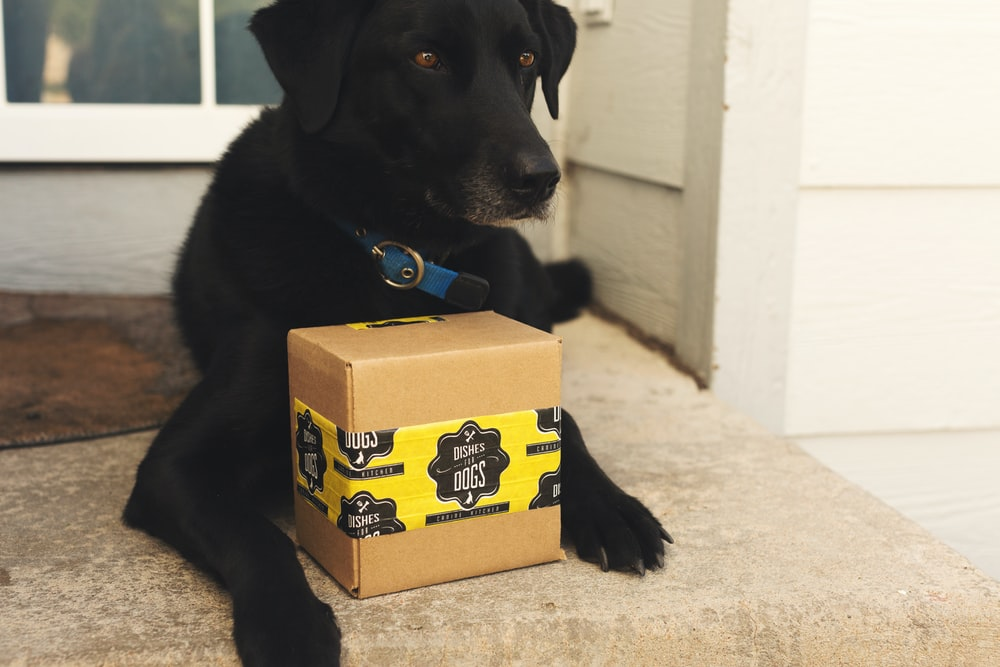 black labrador retriever puppy on brown cardboard box