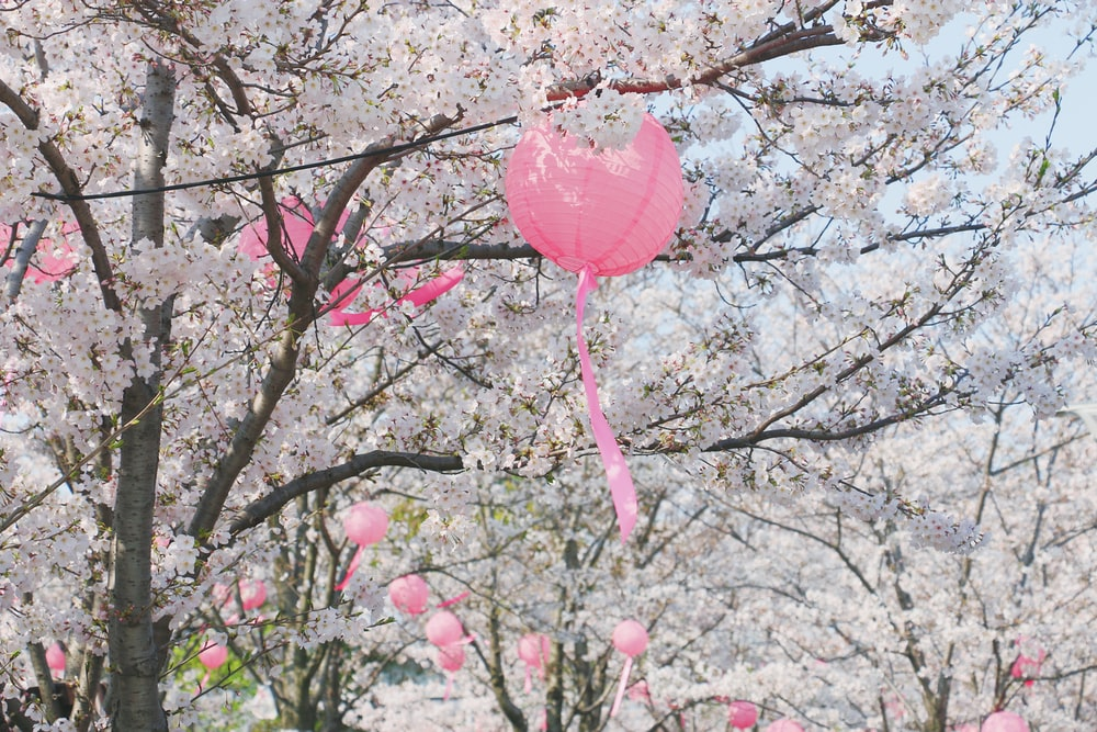pink heart balloon on brown tree branch