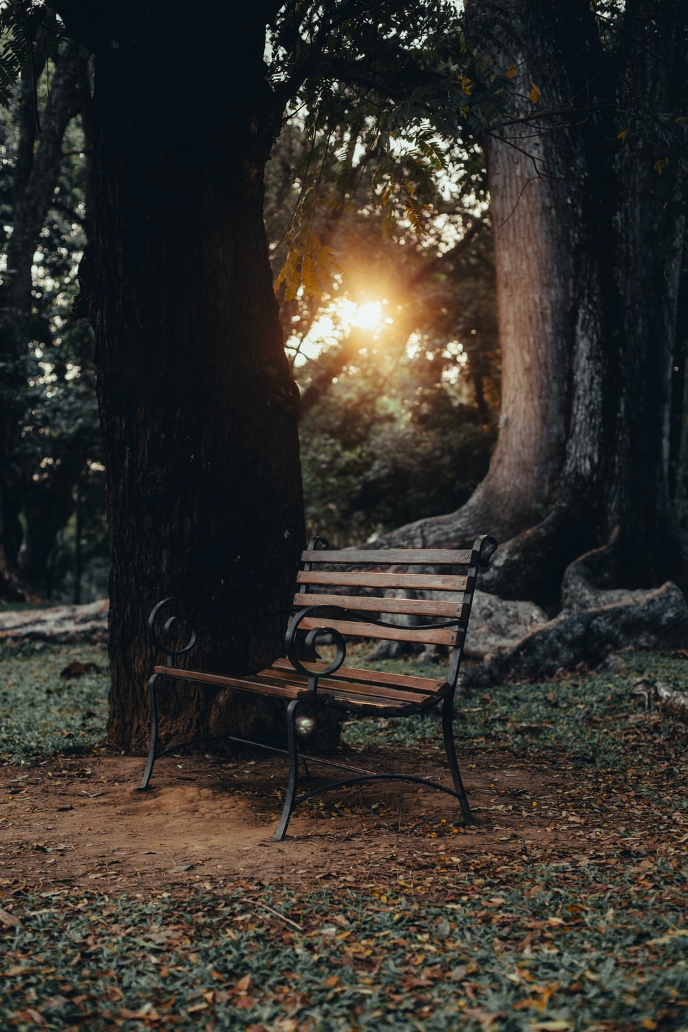 brown wooden bench near tree during sunset