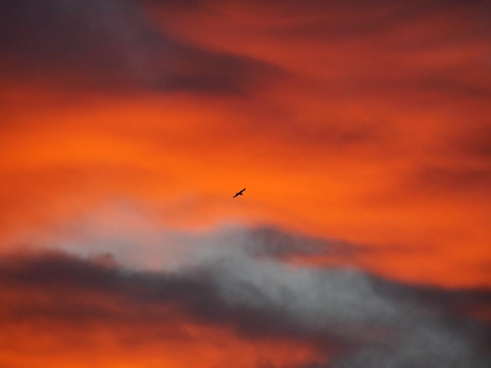 bird flying under orange clouds