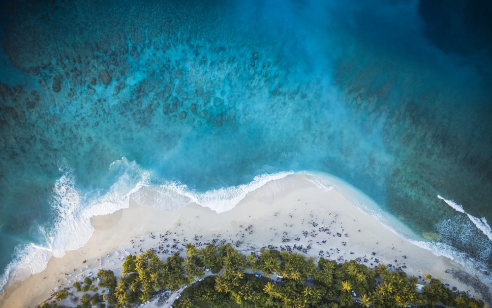 aerial view of green trees and white sand beach during daytime