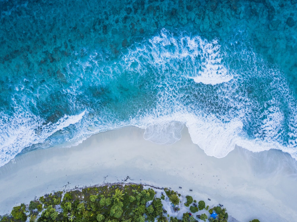 aerial view of green trees and white sand beach