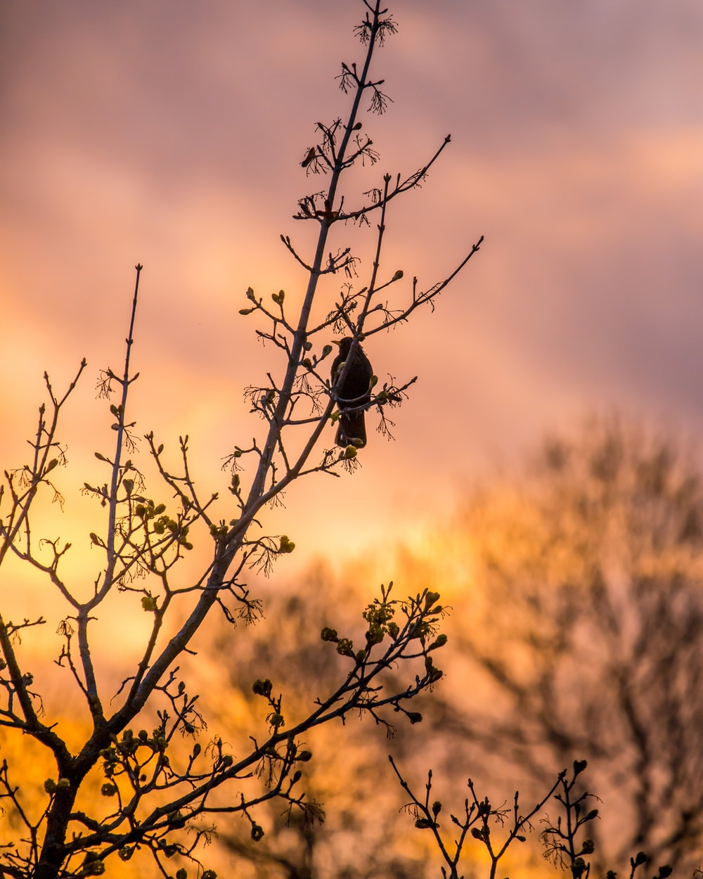 silhouette of bird on bare tree during daytime