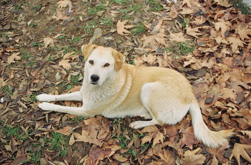 dog shampoo organic dog shampoo