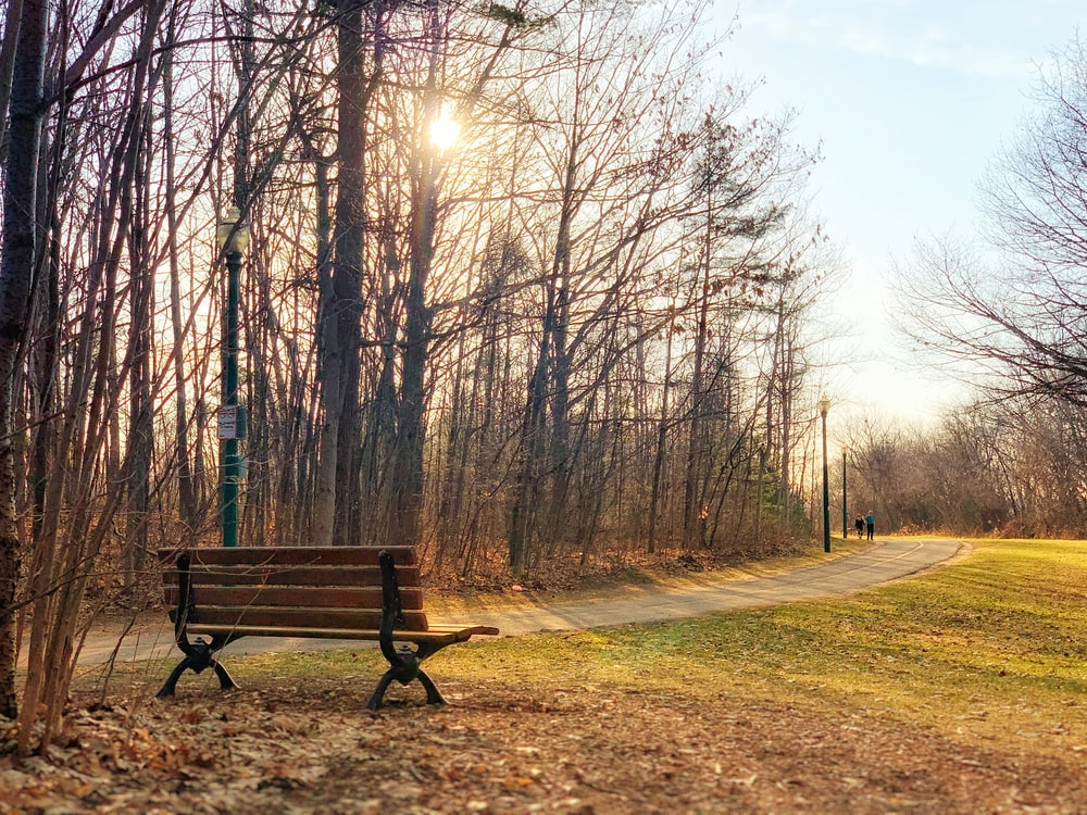 brown wooden bench surrounded by bare trees during daytime