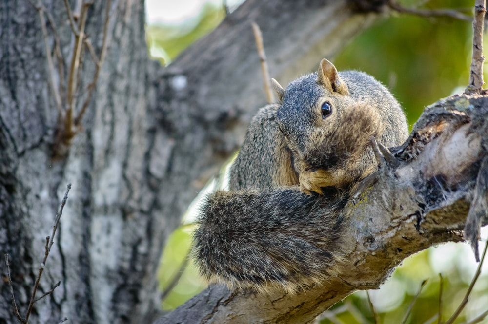 gray squirrel on brown tree branch during daytime