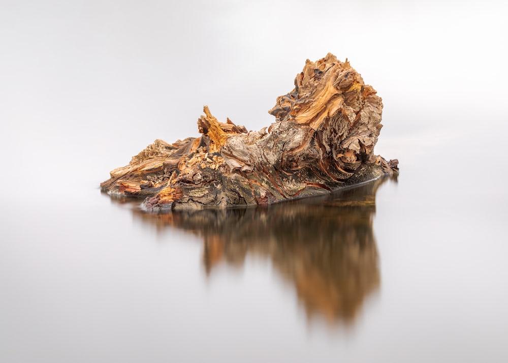 brown tree log on water