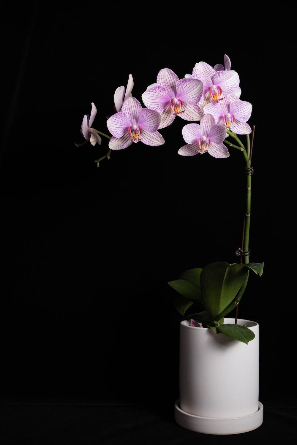 purple and white orchids in white ceramic vase