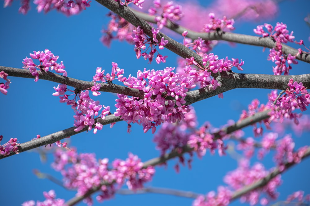 pink flowers on brown tree branch during daytime