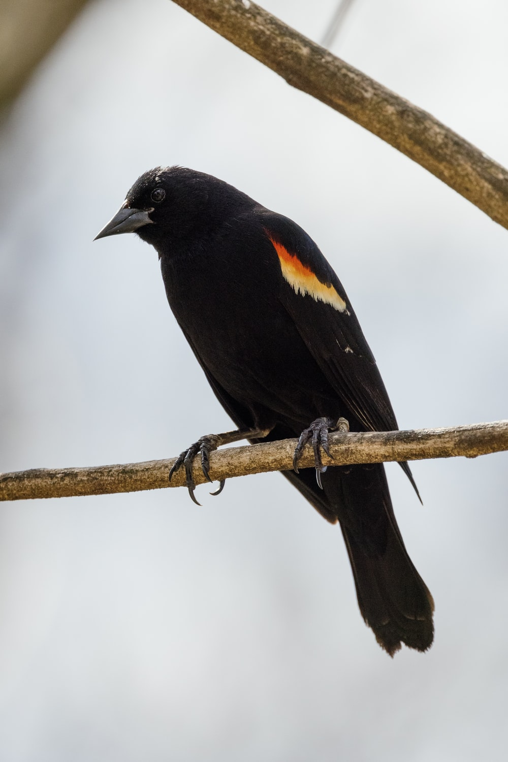 black and brown bird on brown tree branch