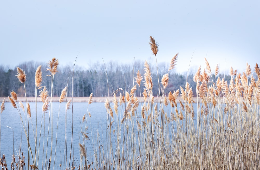 brown grass near body of water during daytime