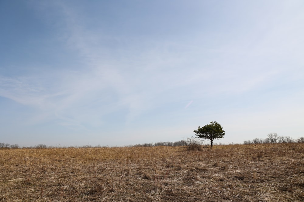 green tree on brown grass field under blue sky during daytime