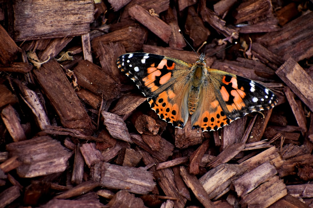 brown black and white butterfly on brown dried leaves