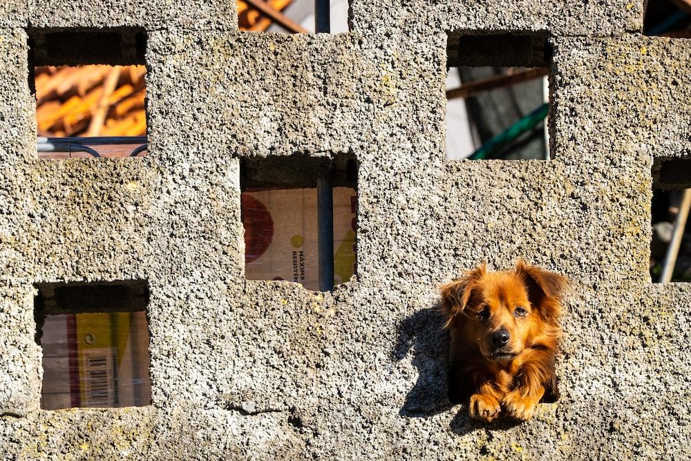 brown long coated dog on brown wooden door