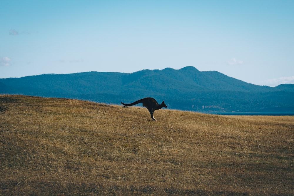 black horse running on brown grass field during daytime