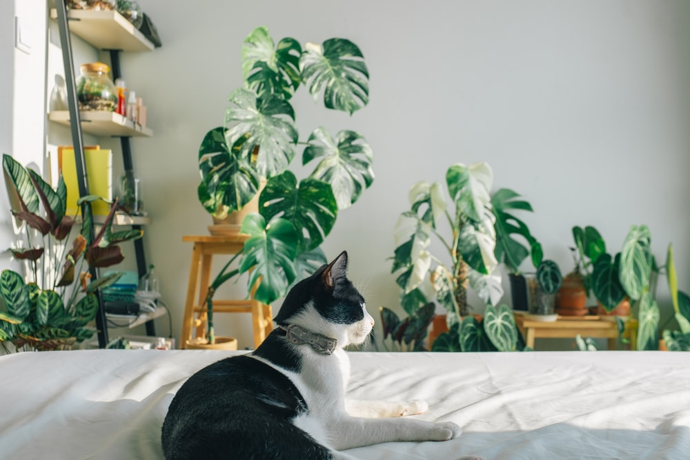 black and white cat on white bed