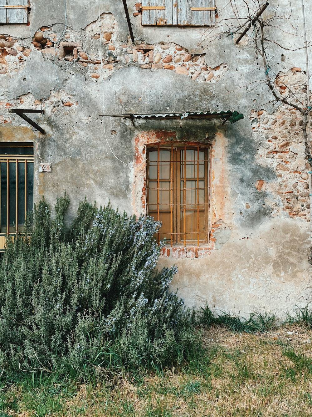 green grass near brown wooden window