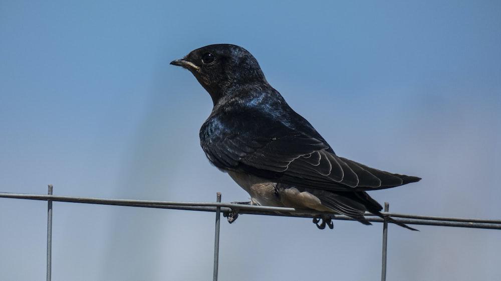 black bird on gray metal fence during daytime