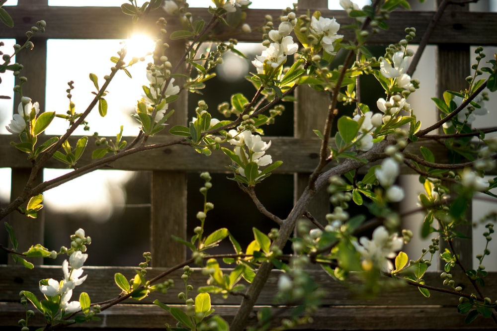 white flowers on brown wooden fence during daytime