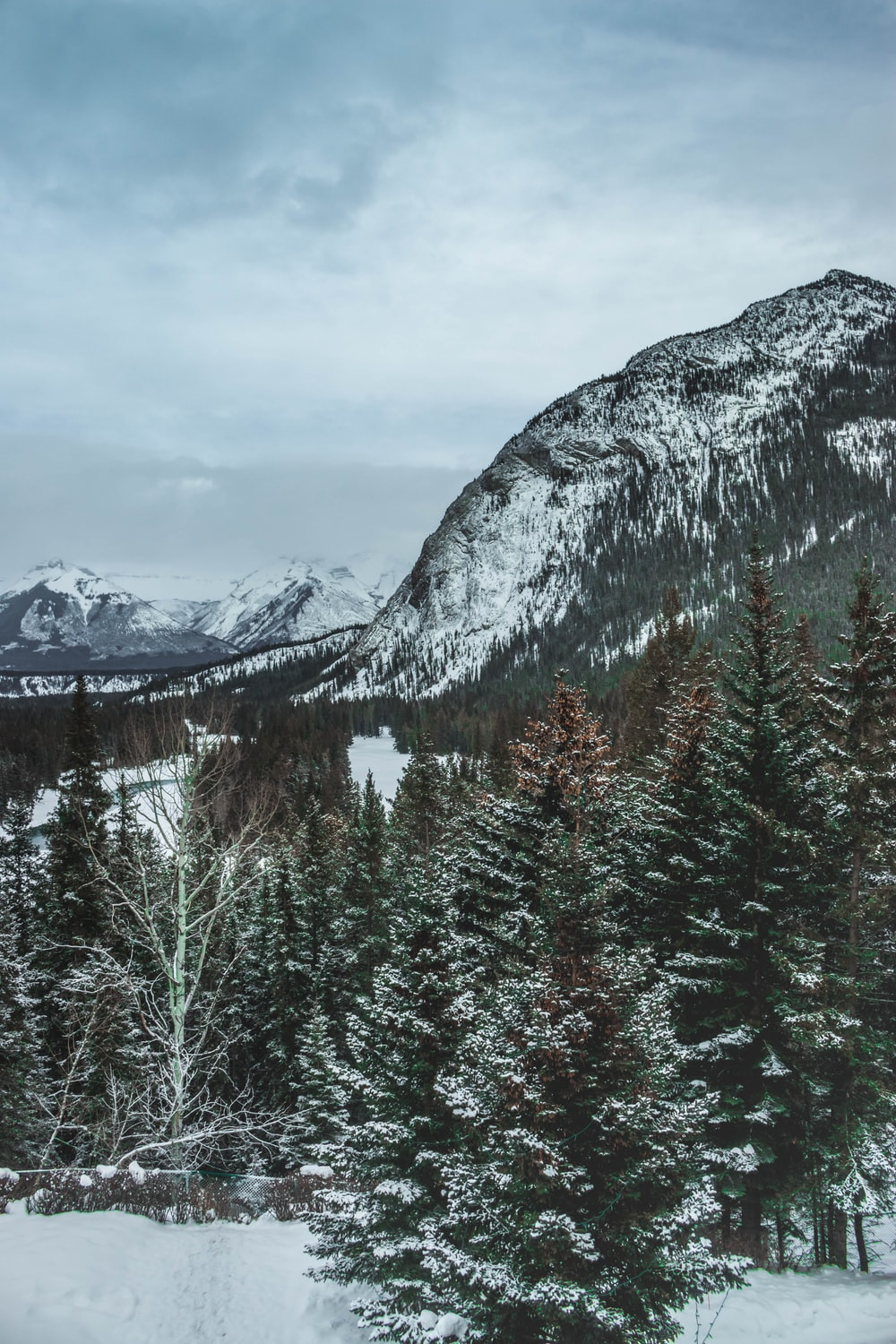 green pine trees near snow covered mountain during daytime