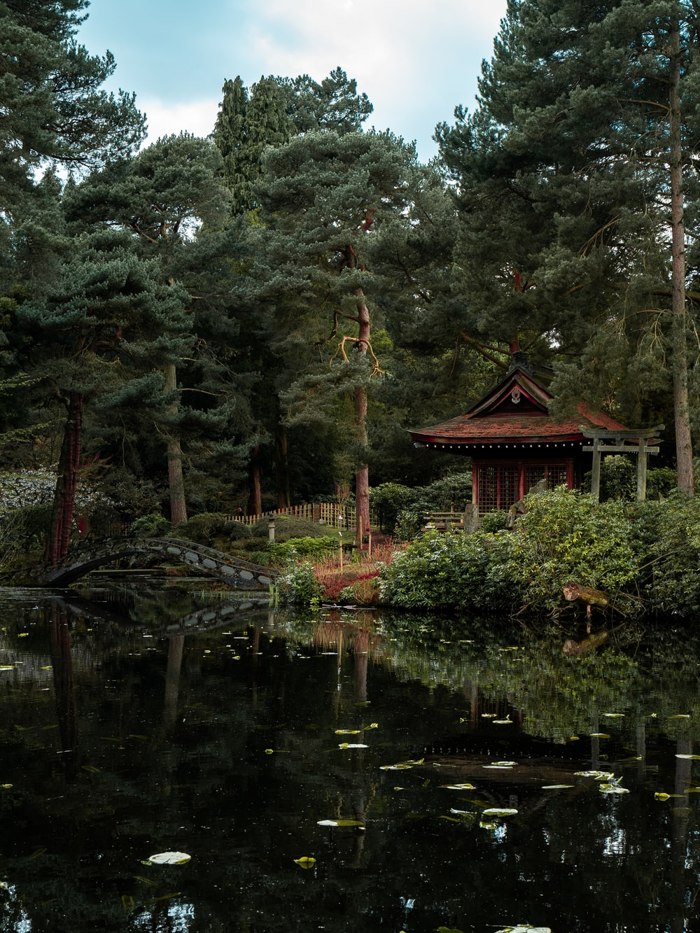 brown wooden house on lake surrounded by trees during daytime