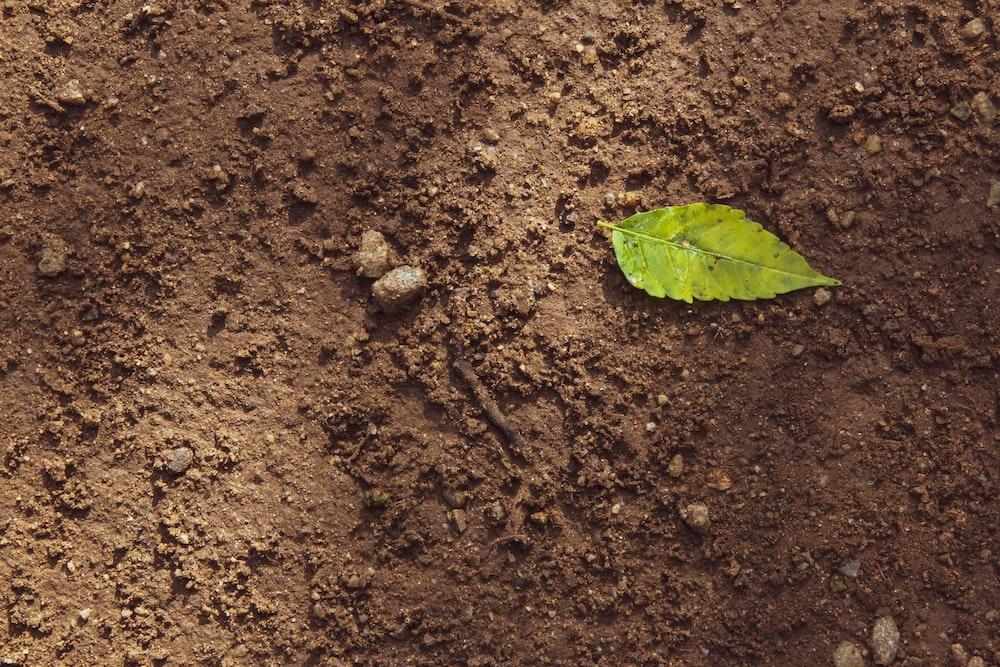 green leaf on brown soil