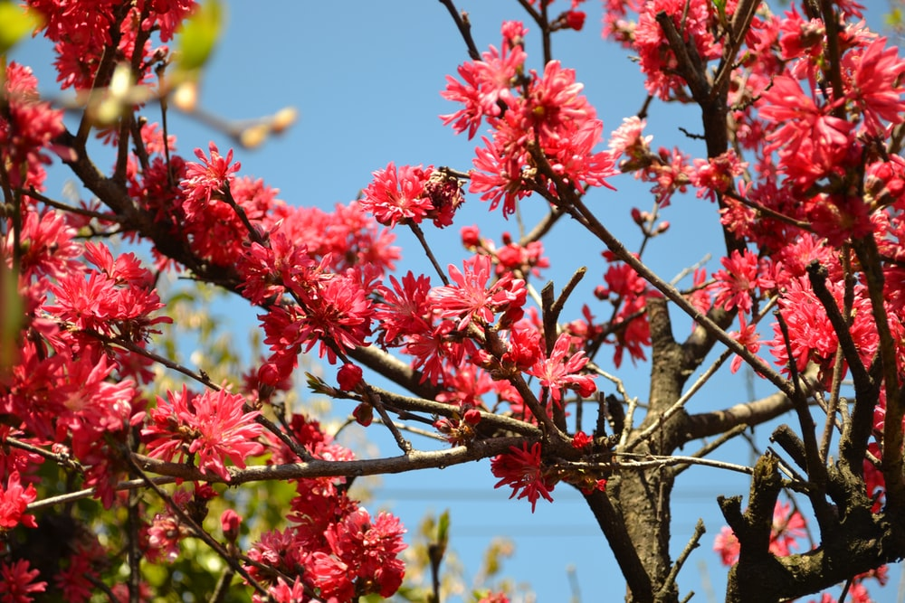 red flowers on brown tree branch during daytime