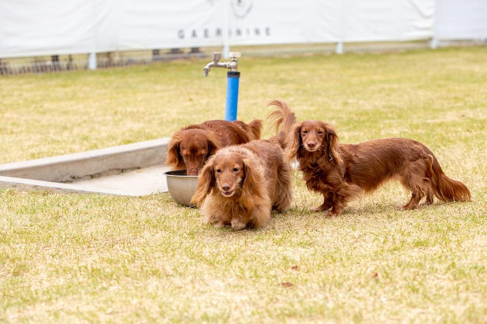 dog shampoo,the best dog shampoo,ESSENTIAL OIL SHAMPOO FOR DOGS