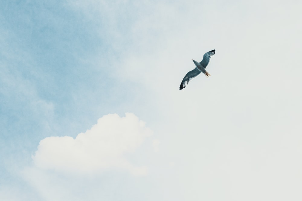 white and black bird flying under white clouds during daytime