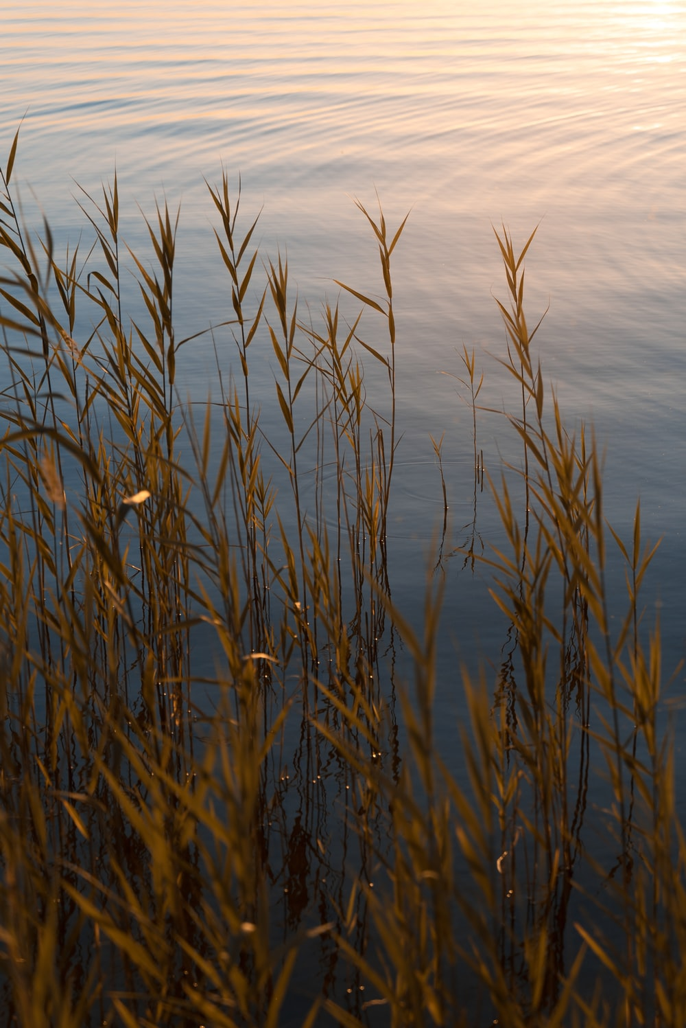 brown grass on body of water during daytime