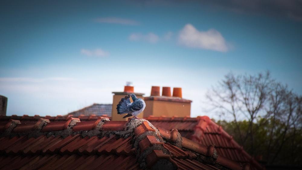 brown roof tiles under blue sky during daytime