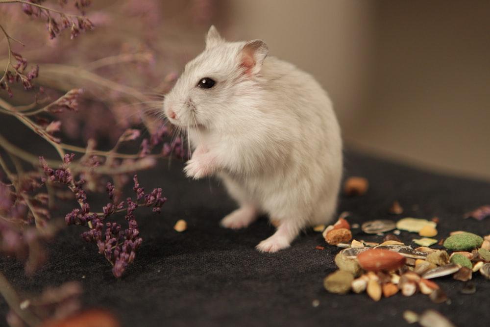 white hamster on black textile