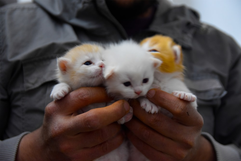 person holding white kitten during daytime