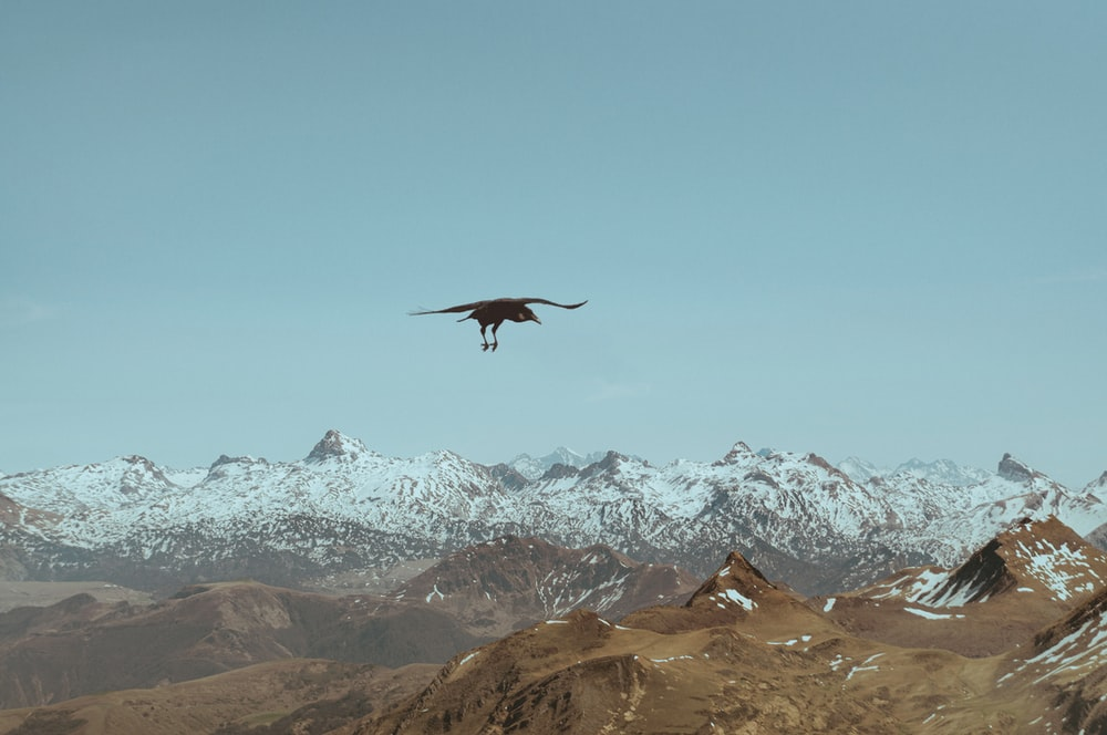 black bird flying over snow covered mountains during daytime