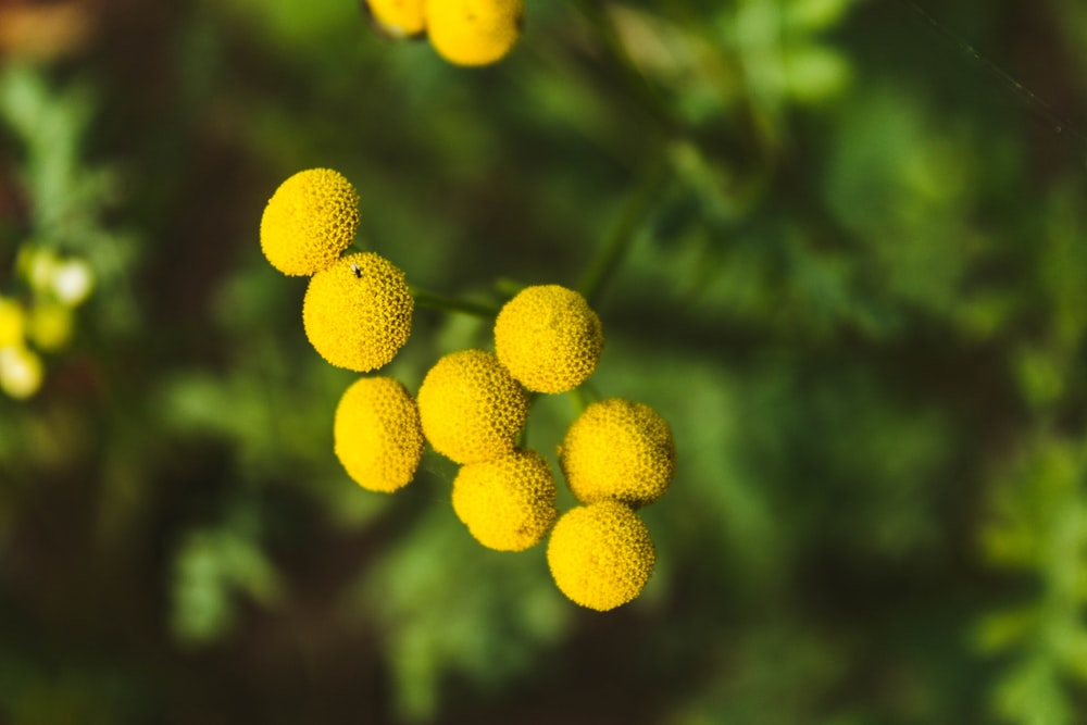 yellow fruits in tilt shift lens