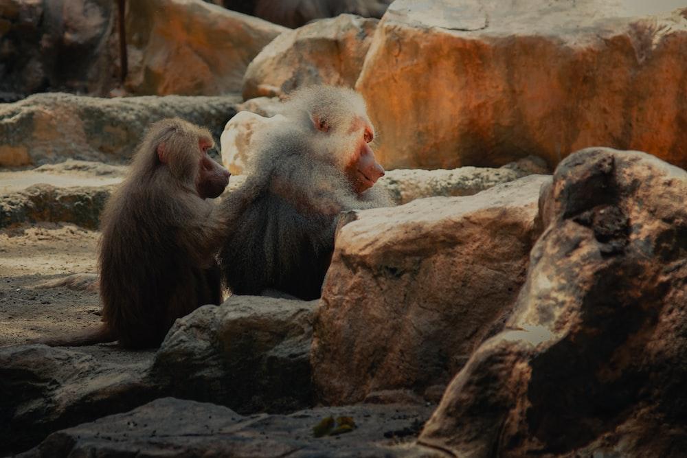 three monkeys on rocky ground during daytime