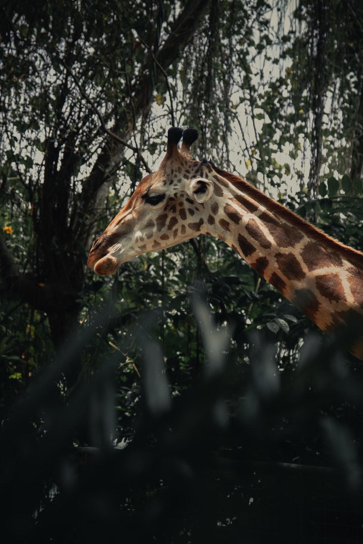 brown giraffe in forest during daytime