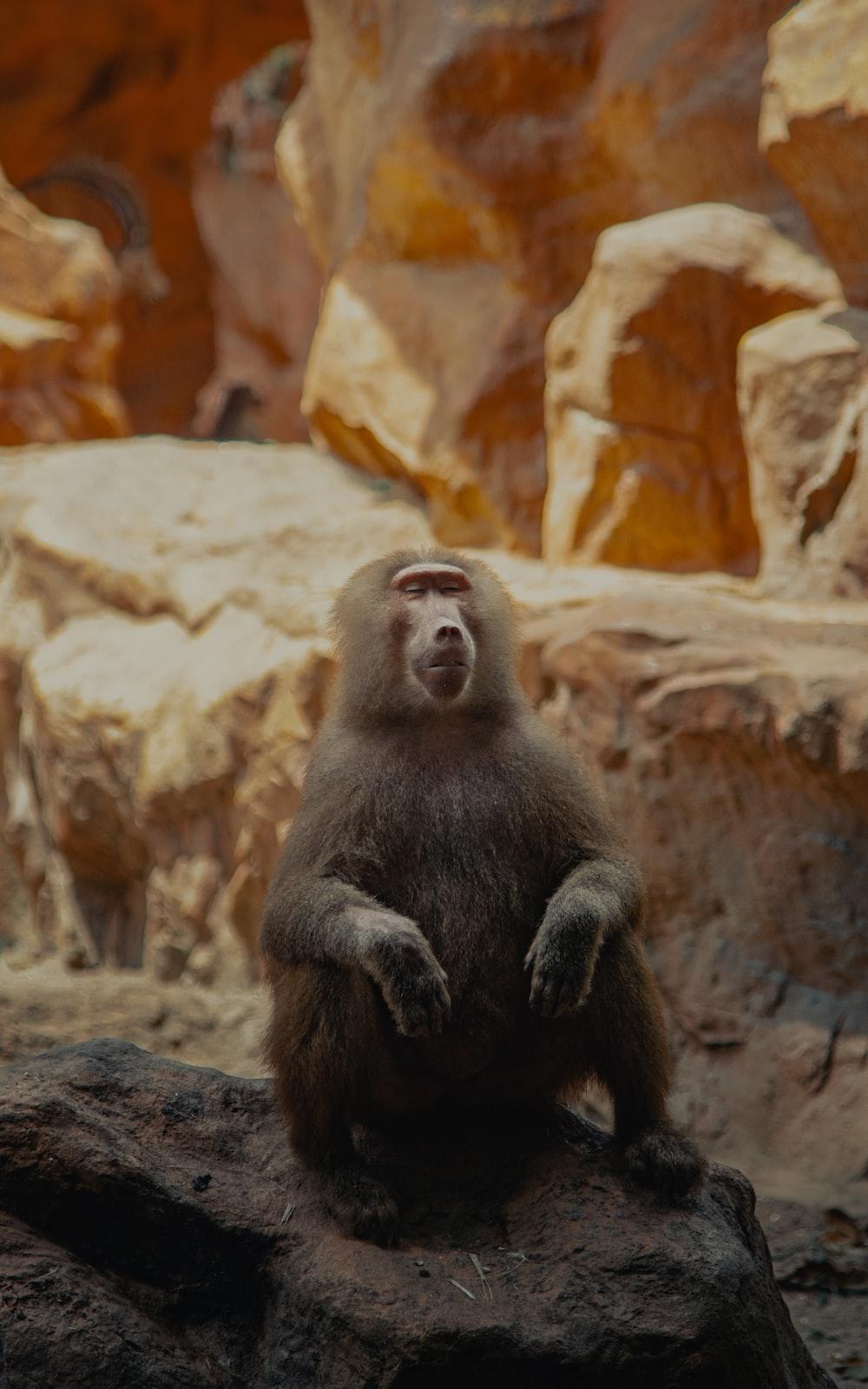 black monkey sitting on rock during daytime